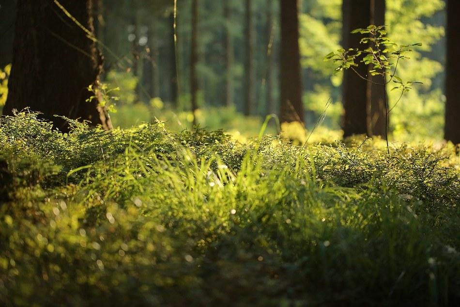 forest floor 4700814 1280