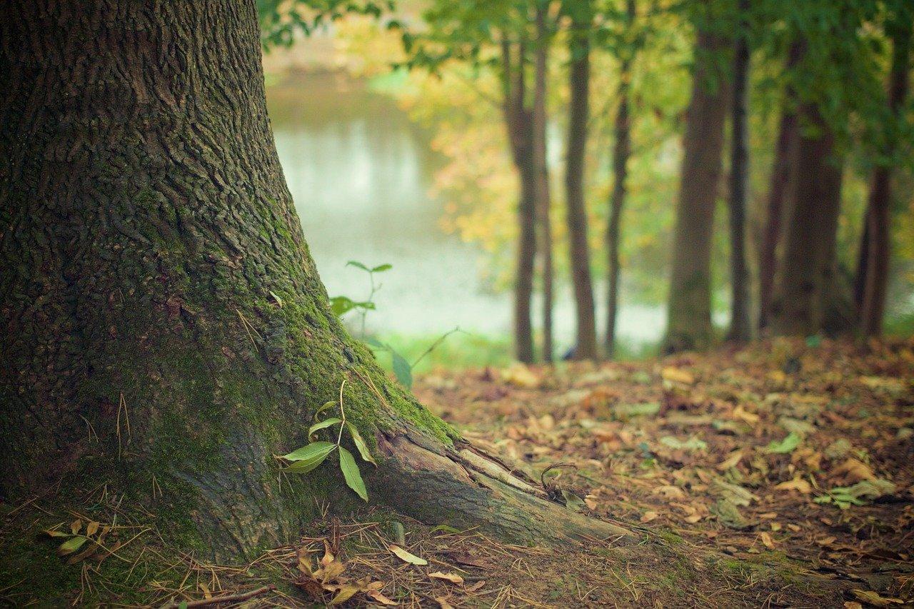 tree trunk 569275 1280