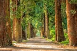 4 000 km de haies et/ou 1 million d'arbres pour la Wallonie