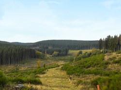 Projet européen Regiowood II : prime à la plantation forestière