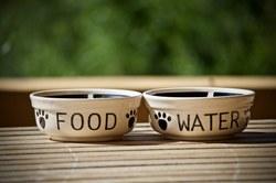 Vous êtes une association non-refuge œuvrant pour le bien-être animal ? Remplissez ce formulaire !